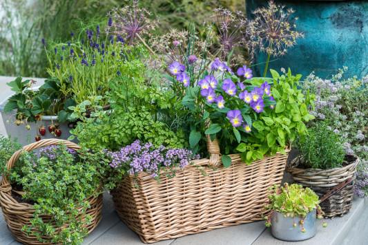 Planting-Herb-Basket-QCON696-nicola-stocken.jpg