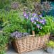 Planting-Herb-Basket-QCON696-nicola-stocken.jpg thumbnail
