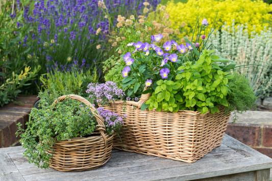 Planting-Herb-Basket-QCON697-nicola-stocken.jpg