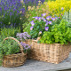Planting-Herb-Basket-QCON697-nicola-stocken.jpg thumbnail