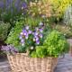 Planting-Herb-Basket-QCON698-nicola-stocken.jpg thumbnail
