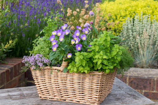 Planting-Herb-Basket-QCON699-nicola-stocken.jpg