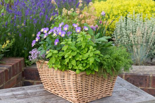 Planting-Herb-Basket-QCON700-nicola-stocken.jpg