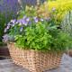 Planting-Herb-Basket-QCON700-nicola-stocken.jpg thumbnail