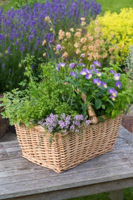 Planting-Herb-Basket-QCON701-nicola-stocken.jpg