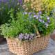 Planting-Herb-Basket-QCON701-nicola-stocken.jpg thumbnail