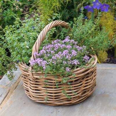 Planting-Herb-Basket-QCON702-nicola-stocken.jpg