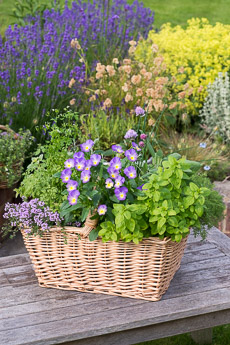 Thumbnail image for Planting a Herb Basket Step by Step