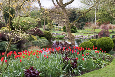 Thumbnail image for John Massey's garden in April