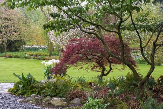 John-Masseys-garden-in-April-GASH229-nicola-stocken.jpg