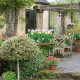 John-Masseys-garden-in-April-GASH230-nicola-stocken.jpg thumbnail