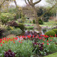 John-Masseys-garden-in-April-GASH236-nicola-stocken.jpg thumbnail