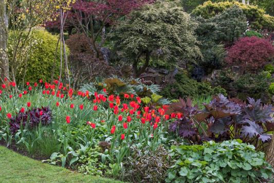 John-Masseys-garden-in-April-GASH237-nicola-stocken.jpg