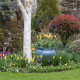 John-Masseys-garden-in-April-GASH246-nicola-stocken.jpg thumbnail