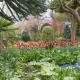 John-Masseys-garden-in-April-GASH249-nicola-stocken.jpg thumbnail