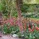John-Masseys-garden-in-April-GASH252-nicola-stocken.jpg thumbnail