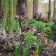 John-Masseys-garden-in-April-GASH255-nicola-stocken.jpg thumbnail
