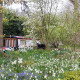 John-Masseys-garden-in-April-GASH265-nicola-stocken.jpg thumbnail