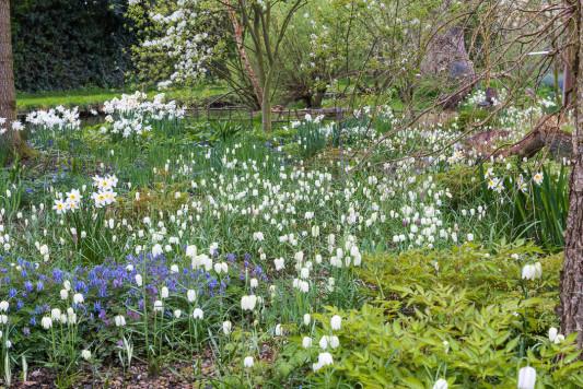 John-Masseys-garden-in-April-GASH268-nicola-stocken.jpg