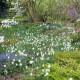John-Masseys-garden-in-April-GASH268-nicola-stocken.jpg thumbnail