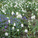 John-Masseys-garden-in-April-GASH272-nicola-stocken.jpg thumbnail