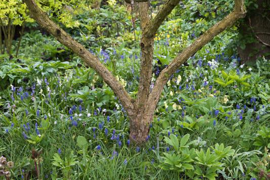 John-Masseys-garden-in-April-GASH274-nicola-stocken.jpg