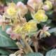 John-Masseys-garden-in-April-GASH281-nicola-stocken.jpg thumbnail