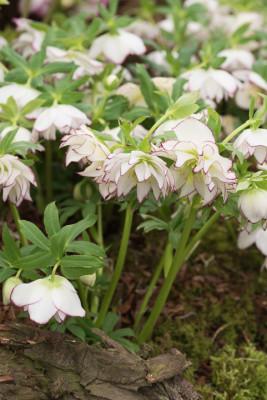 John-Masseys-garden-in-April-GASH291-nicola-stocken.jpg