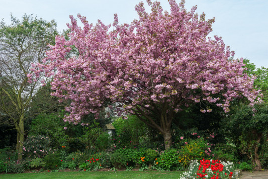 South-Shoebury-Hall-in-April-GSHO018-nicola-stocken.jpg