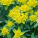 South-Shoebury-Hall-in-April-PEUP019-nicola-stocken.jpg thumbnail