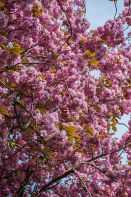 South-Shoebury-Hall-in-April-TPRU067-nicola-stocken.jpg