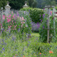 Sweet-peas-at-Easton-Walled-Garden-GEAS020-nicola-stocken.jpg thumbnail