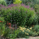 Woodside-avenue-in-July-GWDS023-nicola-stocken.jpg thumbnail