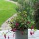 Woodside-avenue-in-July-GWDS030-nicola-stocken.jpg thumbnail