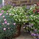 Woodside-avenue-in-July-GWDS032-nicola-stocken.jpg thumbnail
