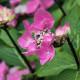 Woodside-avenue-in-July-GWDS037-nicola-stocken.jpg thumbnail