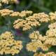 Woodside-avenue-in-July-GWDS039-nicola-stocken.jpg thumbnail