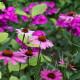 Woodside-avenue-in-July-GWDS042-nicola-stocken.jpg thumbnail