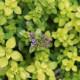 Woodside-avenue-in-July-GWDS044-nicola-stocken.jpg thumbnail