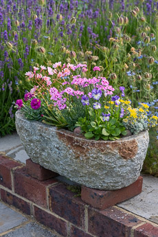 Thumbnail image for Alpine Trough Step-by-Step