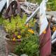 Fiddlers-Green-in-June-GFDG025-nicola-stocken.jpg thumbnail