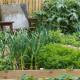 Fiddlers-Green-in-June-GFDG036-nicola-stocken.jpg thumbnail