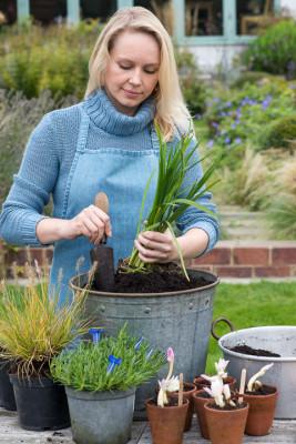 Planting-An-Autumn-Bucket-QCON374-nicola-stocken.jpg
