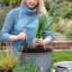 Planting-An-Autumn-Bucket-QCON374-nicola-stocken.jpg thumbnail