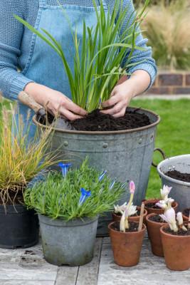 Planting-An-Autumn-Bucket-QCON375-nicola-stocken.jpg