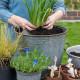 Planting-An-Autumn-Bucket-QCON375-nicola-stocken.jpg thumbnail