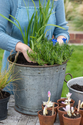 Planting-An-Autumn-Bucket-QCON376-nicola-stocken.jpg