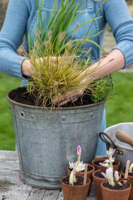 Planting-An-Autumn-Bucket-QCON377-nicola-stocken.jpg