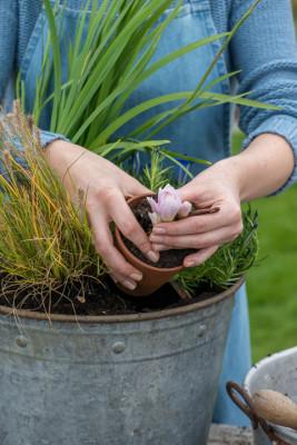 Planting-An-Autumn-Bucket-QCON378-nicola-stocken.jpg