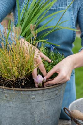 Planting-An-Autumn-Bucket-QCON379-nicola-stocken.jpg